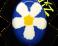 Slidery Wiz - Daisy modro-bílo-žluté
